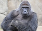 Cincinnati Zoo PR Crisis Management