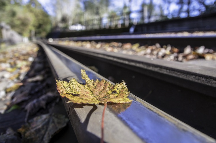 Leaves on the track type excuse